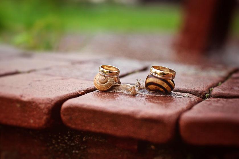 сватбени пръстени фотография